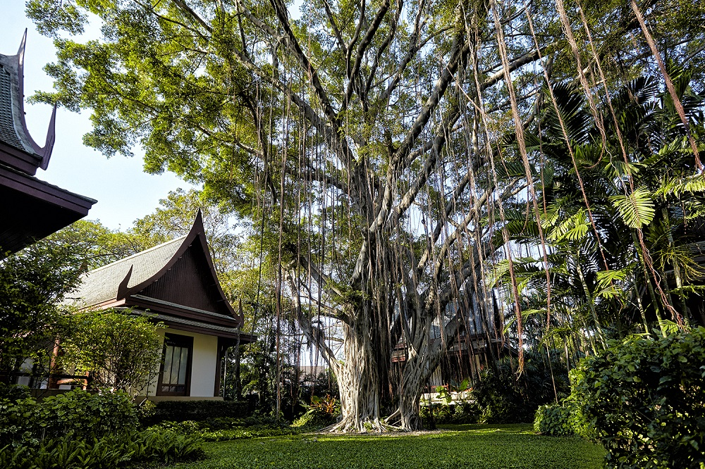 Chiva-Som Banyan Tree - L