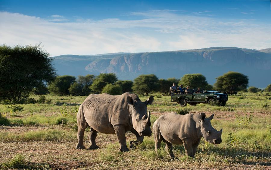 med-safariwildliferhino3-140351