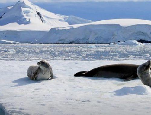 Hurtigruten Antarctica Sale